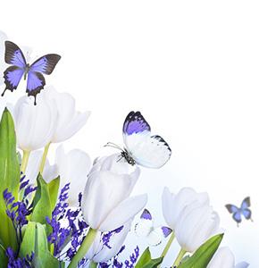натяжные потолки Бабочки
