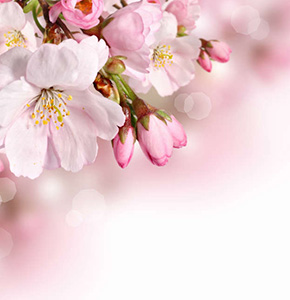 натяжные потолки Цветы